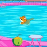 Cat Escape From Swimming Pool