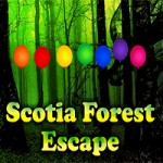 Scotia Forest Escape