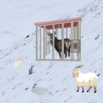 WowEscape The Reindeer