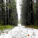Return To Winter Forest