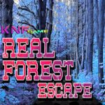 Real Forest Escape