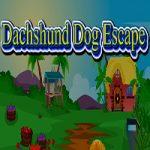 Dachshund Dog Escape