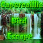 Capercaillie Bird Escape
