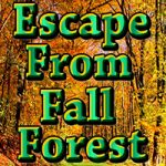 Escape From Fall Forest