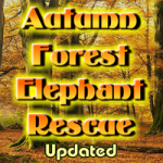 Autumn Forest Elephant Rescue