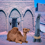 Escape Game Desert Camel