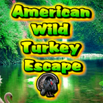 American Wild Turkey Escape