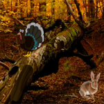 Mysterious Turkey Forest Escape