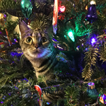 Christmas Tree Kitty Puzzle