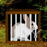 Rain Forest Rabbit Escape