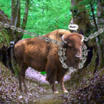 Escape Game Save The Country Bull