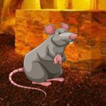 Feed The Hungry Rat