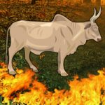 Fire Forest Bull Escape