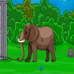 Forest Elephant Rescue