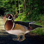 Forest Wood Duck Rescue