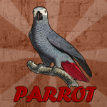 Grey Parrot Rescue