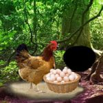 Help The Incubation Hen