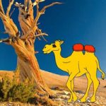Help The Thirsty Camel