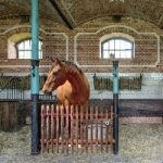 Horse Barn House Escape