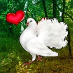 Love Pigeon Forest Escape