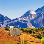 Mountain Sheep Escape