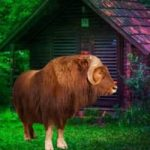 Musk Ox Forest Escape