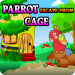 Parrot Escape From Cage