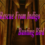 Rescue From Indigo Bunting Bird