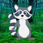 Rescue Raccoon From Forest