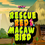 Rescue Red Macaw Bird
