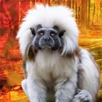 Rescue The Tamarin