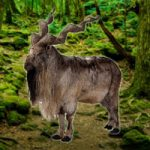 Save The Markhor