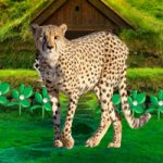 Save The Mountain Cheetah