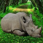 Save The Rhinoceros
