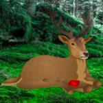 Save The Wounded Deer