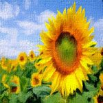 Sunflowers Room Amajeto