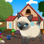 Tonkinese Cat Rescue