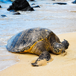 Turtle On The Beach Puzzle