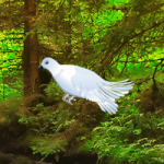 White Pigeon Forest Escape