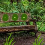 Wooden Bench Forest Escape