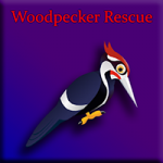 Woodpecker Rescue